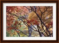 Framed Lithia Park Fall 3