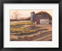 Barn & Sunflowers I Framed Print