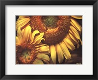 Framed Floral Beauty I