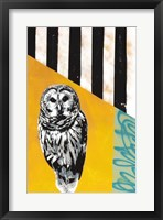 Framed Barred Owl