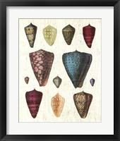 Colorful Shell Assortment II Framed Print