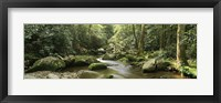 Framed Roaring Fork River flowing through forest, Roaring Fork Motor Nature Trail, Great Smoky Mountains National Park, Tennessee, USA