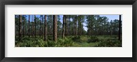 Framed Okefenokee National Wildlife Refuge, Georgia