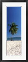 Framed Palm tree on the beach, Smathers Beach, Key West, Monroe County, Florida, USA