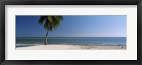 Framed Palm tree on the beach, Smathers Beach, Key West, Florida, USA