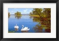 Framed Swans on the Lake