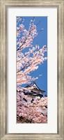 Framed Hikone Castle w\cherry blossoms Shiga Japan