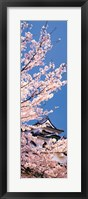 Framed Hikone Castle w\cherry blossoms Shiga Japan