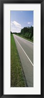 Framed Trees along the road, Alabama State Route 113, Alabama, USA