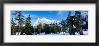 Framed Trees on a snow covered mountain, Mt Shuksan, Mt Baker-Snoqualmie National Forest, Washington State, USA