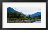 Framed Trees in front of mountains in Quinault Rainforest, Olympic National Park, Washington State, USA