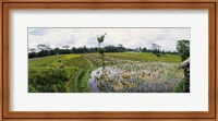 Framed Farmers working in a rice field, Bali, Indonesia