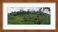 Framed Terraced rice field, Bali, Indonesia