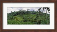 Framed Terraced rice field, Bali, Indonesia