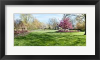 Framed Trees in a Garden, Sherwood Gardens, Baltimore, Maryland