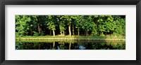 Framed Canal near Lisse, Netherlands