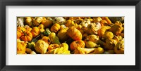 Framed Pumpkins and gourds in a farm, Half Moon Bay, California, USA