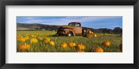 Framed Old Rusty Truck in Pumpkin Patch, Half Moon Bay, California, USA