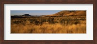 Framed Dry grass on a landscape, Texas, USA