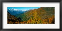 Framed Trees with road in autumn at Simplon Pass, Valais Canton, Switzerland