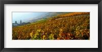 Framed Vineyards and village in autumn, Valais Canton, Switzerland