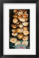 Framed Tasmanian oysters for sell in the Central Market, Adelaide, South Australia, Australia