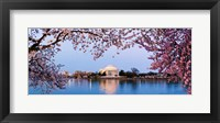 Framed Cherry Blossom tree with a memorial in the background, Jefferson Memorial, Washington DC, USA