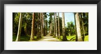 Framed Trees both sides of a garden path, Jardim Botanico, Zona Sul, Rio de Janeiro, Brazil