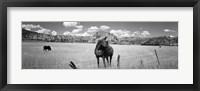 Framed Horses Grazing at Kolob Reservoir, Utah (black & white)