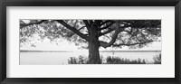Framed Tree on a Lake, Wisconsin (black & white)