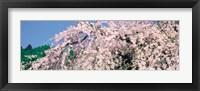 Framed Jyoshokou-ji Kyoto Japan