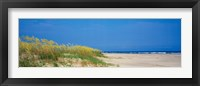 Framed Sea oat grass on the beach, Charleston, South Carolina, USA