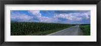 Framed Road along corn fields, Christian County, Illinois, USA
