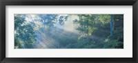 Framed Sun filtering through trees, Nagano Japan