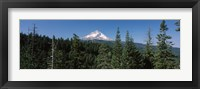 Framed Trees in a forest with mountain in the background, Mt Hood National Forest, Hood River County, Oregon, USA