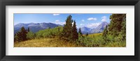 Framed Trees with mountains in the background, Looking Glass, US Glacier National Park, Montana, USA