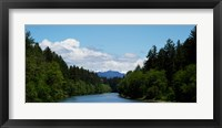 Framed River flowing through a forest, Queets Rainforest, Olympic National Park, Washington State, USA