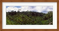 Framed Terraced rice field and Palm Trees, Flores Island, Indonesia