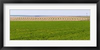 Framed Harvested alfalfa field patterns, Oklahoma, USA