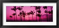 Framed Silhouette of palm trees at dusk, Hawaii, USA