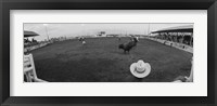 Framed Cowboy riding bull at rodeo arena, Pecos, Texas, USA