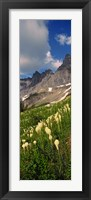Framed Beargrass with Mountains, Glacier National Park, Montana