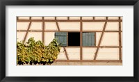 Framed Detail of half timber house and grape vines, Strumpfelbach, Baden-Wurttemberg, Germany