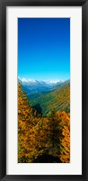 Framed Trees in autumn at Simplon Pass, Valais Canton, Switzerland (vertical)