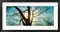 Framed Sunlight shining through a bare tree, Prospect Park, Brooklyn, Manhattan, New York City, New York State, USA