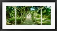 Framed Pathway in a botanical garden, Jardim Botanico, Zona Sul, Rio de Janeiro, Brazil