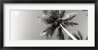 Framed Low angle view of palm trees, Morro De Sao Paulo, Tinhare, Cairu, Bahia, Brazil