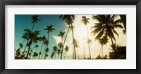Framed Palm trees along the beach in Morro De Sao Paulo, Tinhare, Cairu, Bahia, Brazil