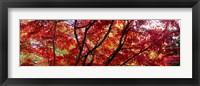 Framed Autumn Leaves, Gloucestershire, England
