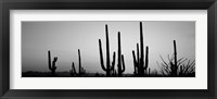 Framed Black and White Silhouette of Saguaro cacti, Saguaro National Park, Arizona